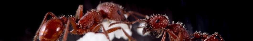 Ants Alive