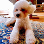 Toy Poodle Family Channel