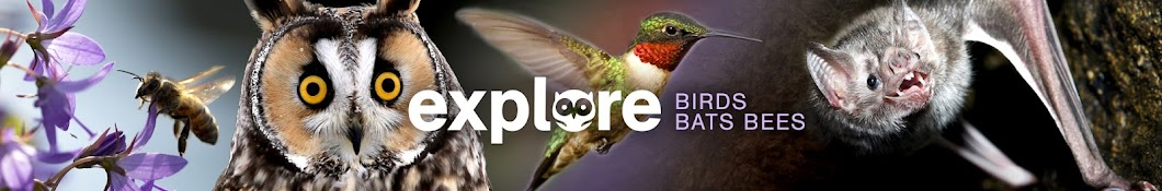 Explore Birds Bats Bees