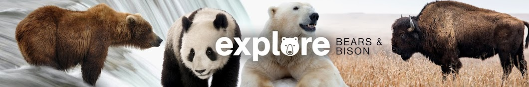 Explore Bears & Bison