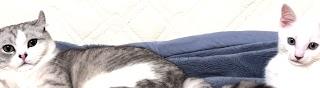 Cat Blue \u0026 Haku Cinema