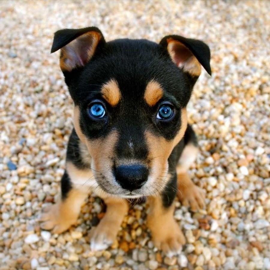 Cute Dogs Channel
