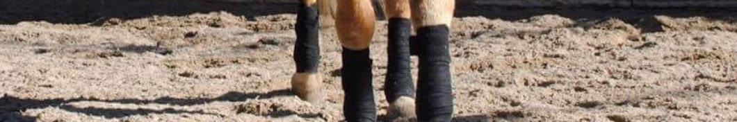 P.V mein Pferde Leben