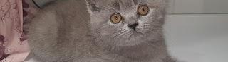 Кот Паук Самый известный британец
