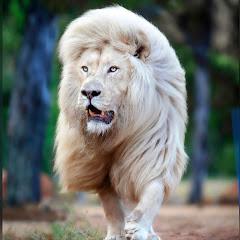 Lion King93