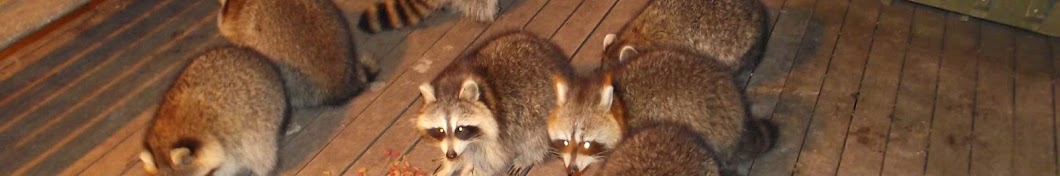 James Blackwood - Raccoon Whisperer Banner