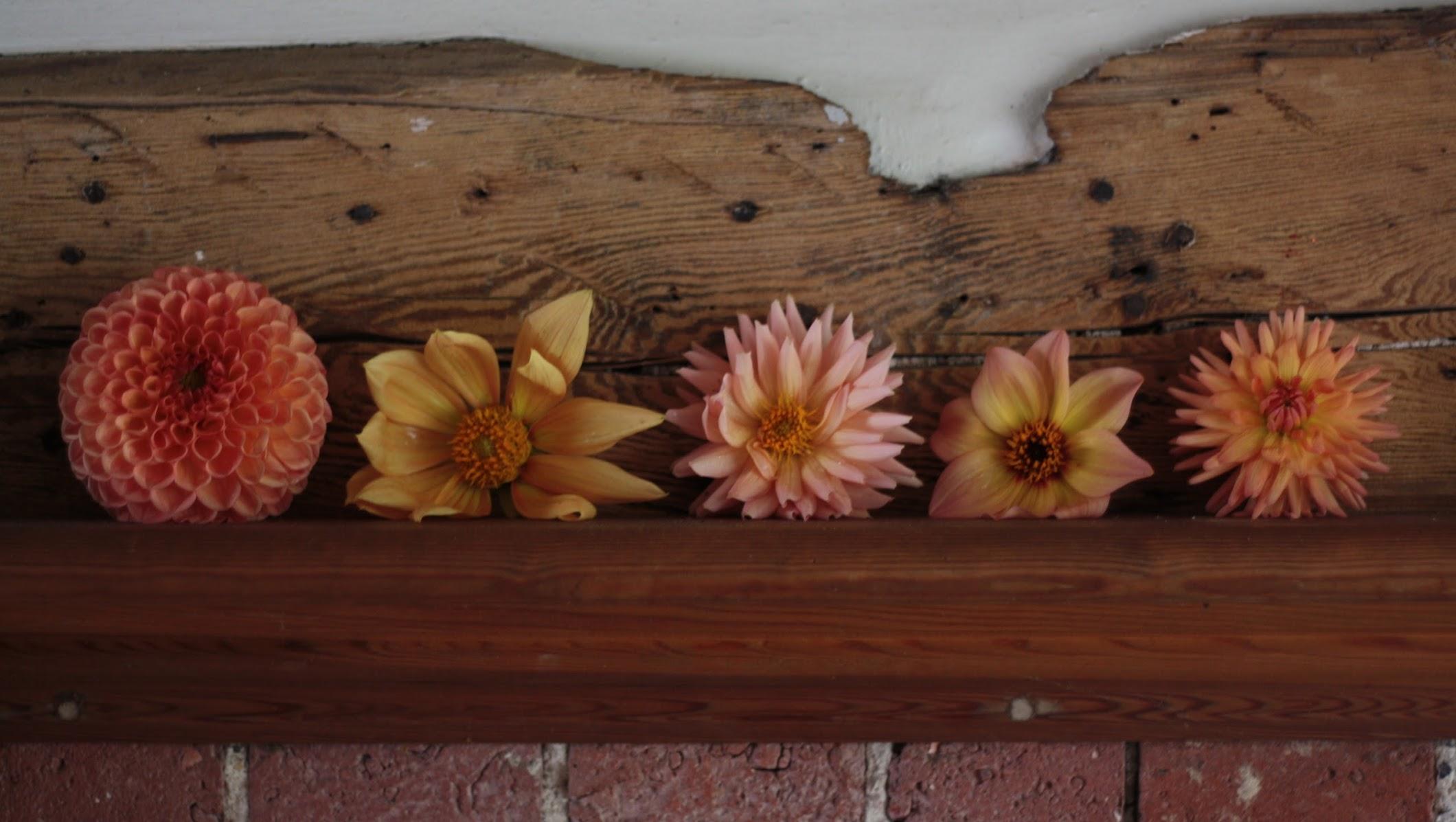 Anna's Flower Farm