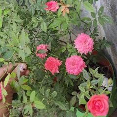 Jezlin Garden