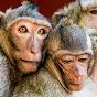 Jane Monkeys Idol