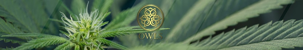 Owls TV Banner