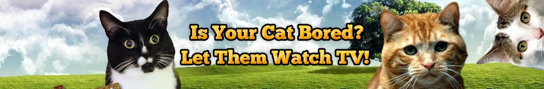 Videos For Your Cat