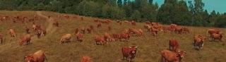Bieszczadzkie Rolnictwo