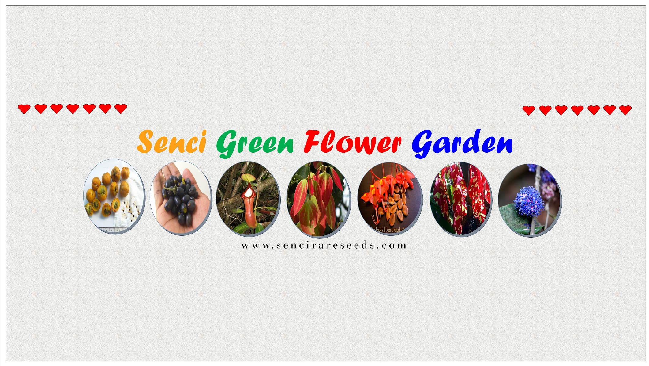 Senci Green Flower Garden