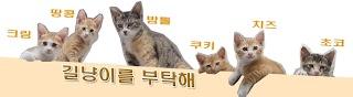 Stray cat Care
