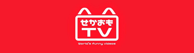 無料テレビで爆笑おもしろ猫動画まとめを視聴する