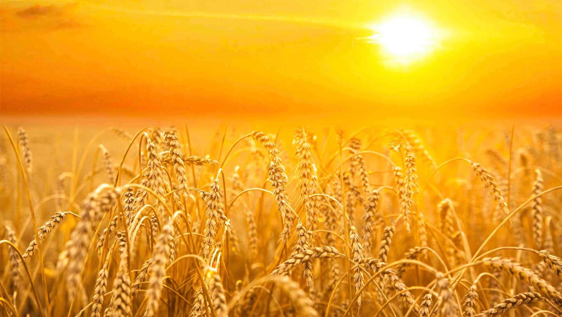Жигули, фоны на открытки сельское хозяйство