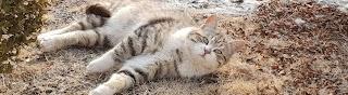 고양이탐정TV