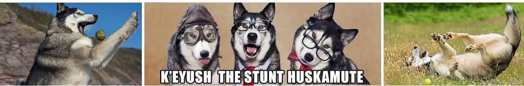K'eyush The Stunt Dog