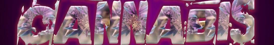 Cannabis Jay