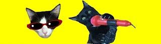 Videos divertidos de gatos Luna y Estrella