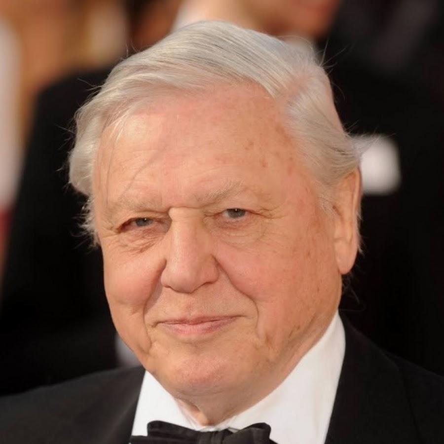 David Attenborough - Topic - YouTube