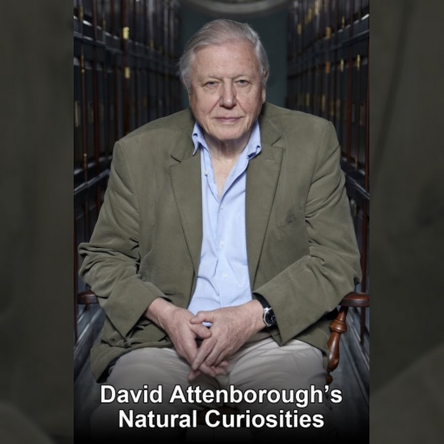 David Attenborough S Natural Curiosities Season  Episode