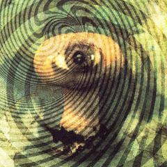 Psychedelic Eyeball