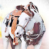 SP Performance Horses