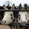 The Donkey Sanctuary Ireland
