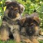 AMAZING DOG TRAINER