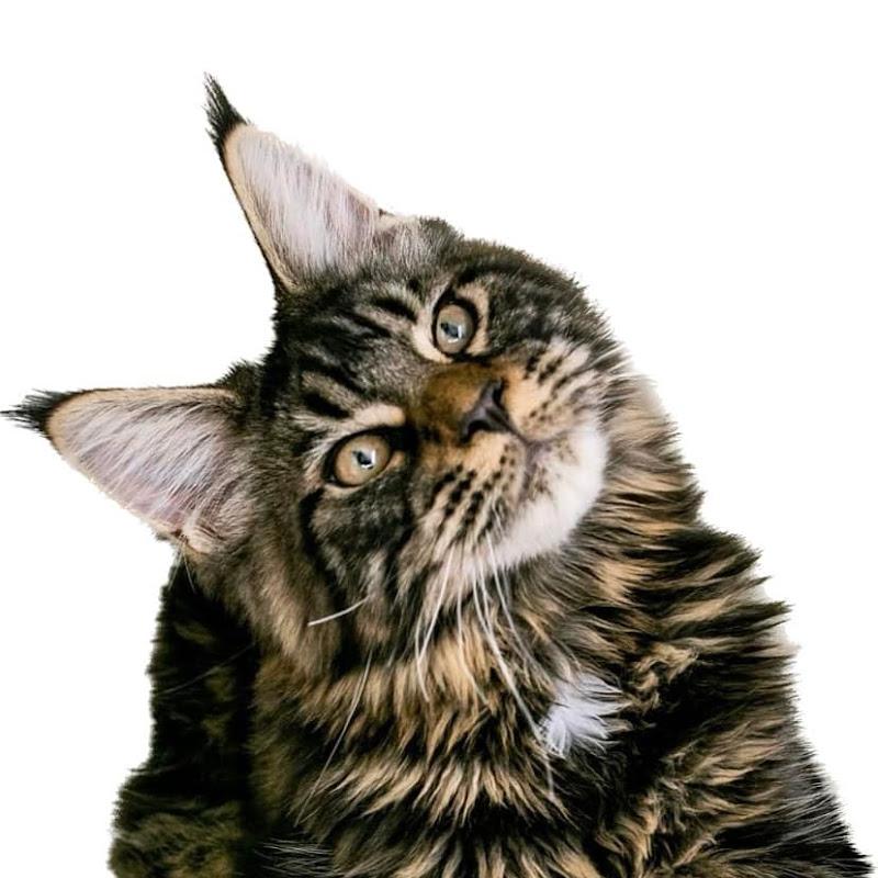 Annie, Molly & Susie