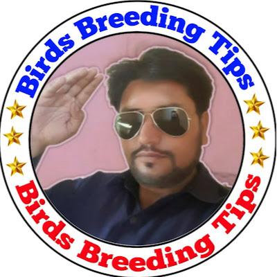 Birds Breeding Tips | الكويت VLIP LV