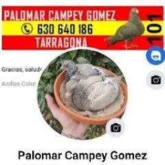 goldfish españa CAMPEY FARM