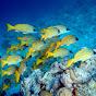 King Aquatics - Providing Tropical Fish Information (king-aquatics-providing-tropical-fish-information)
