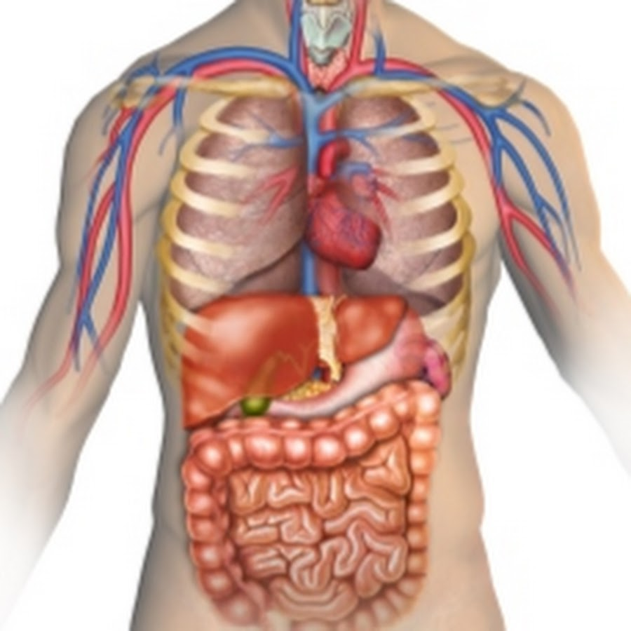 Anatomy For Medical Students Hussain Youtube