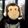 Douche The Monkey