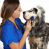 The Upscale Tail, Pet Grooming Salon Naperville, IL - Dog Groomers - Cat Groomers