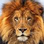 Africa Wild Animals