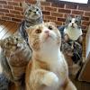 반창고-반갑다창문밖고양이-Bandaid 20cats