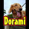 dorami24/ドラミ