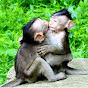 SR-Monkeys Hunter