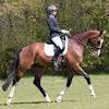 Palsma Quality Horses