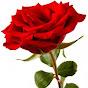 Mawar Bunga