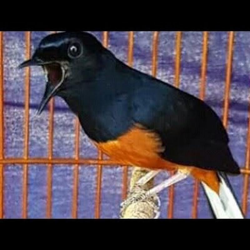 84 Foto Gambar Burung Merpati Tinggian HD Terbaru Gratis