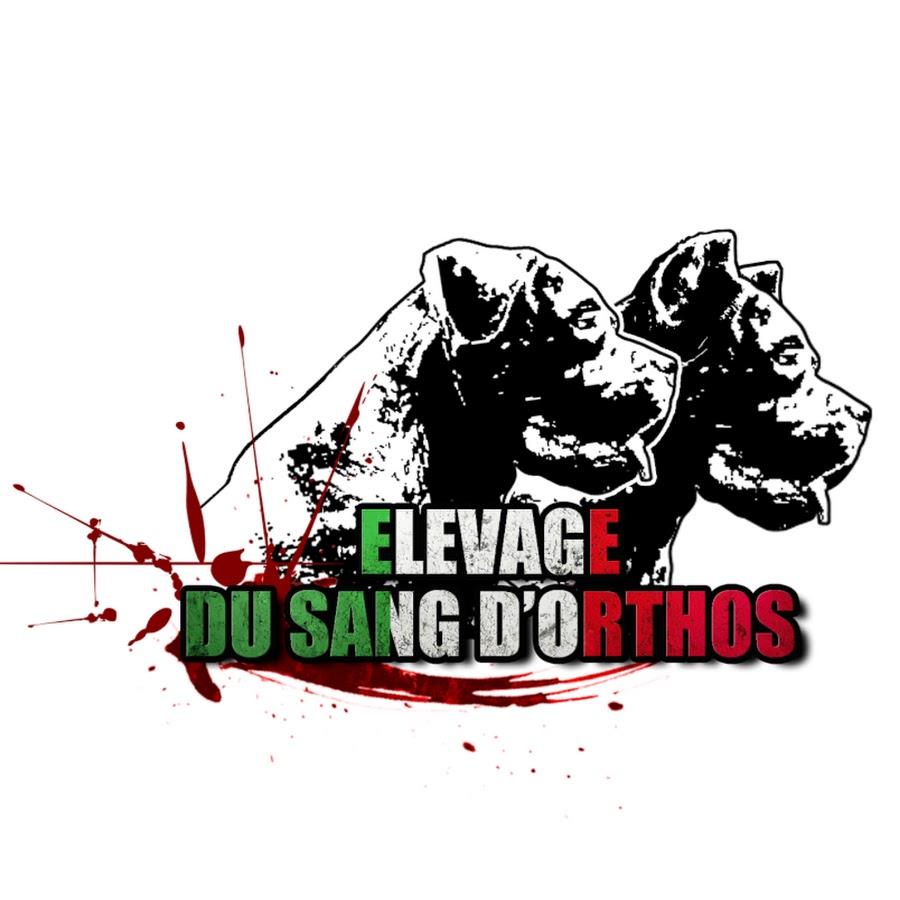 Elevage De Cane Corso Du Sang Dorthos Youtube