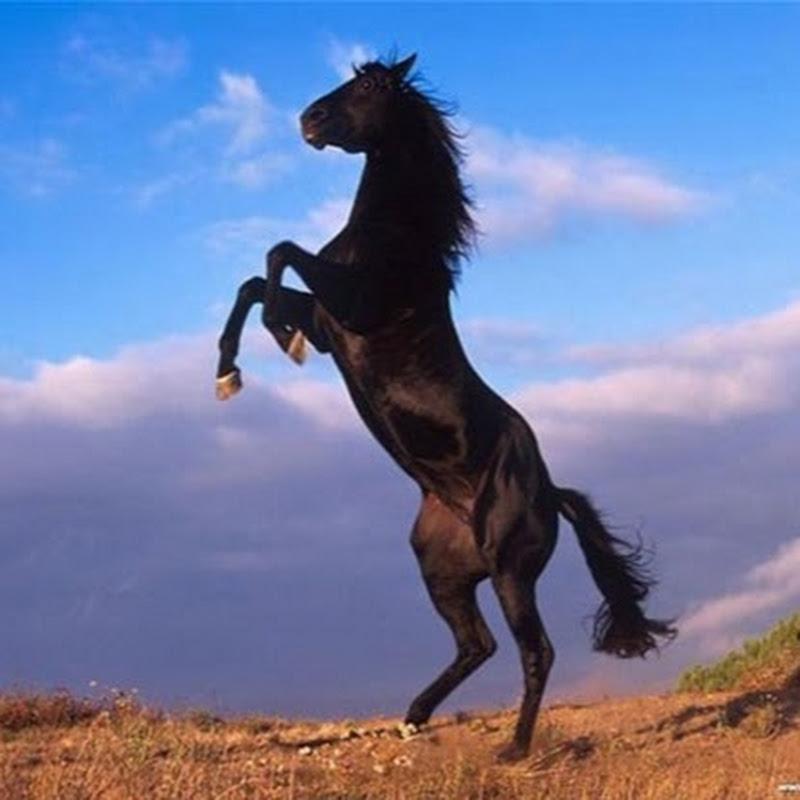 وردي اغنية نوبية سودانية Wardi Nubian Song Ikaigely Kmashka