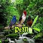 pássaros e melodias