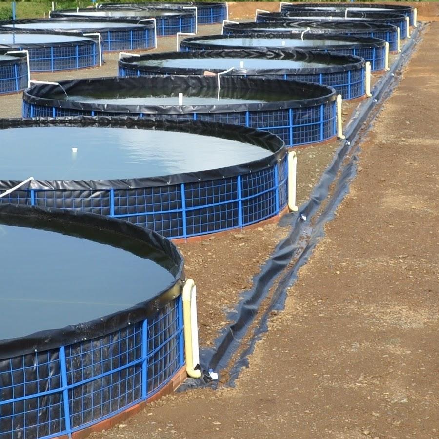 Tanques y estanques de geomembrana para el cultivo de for Estanques de mojarra tilapia