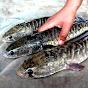 Big Fish World