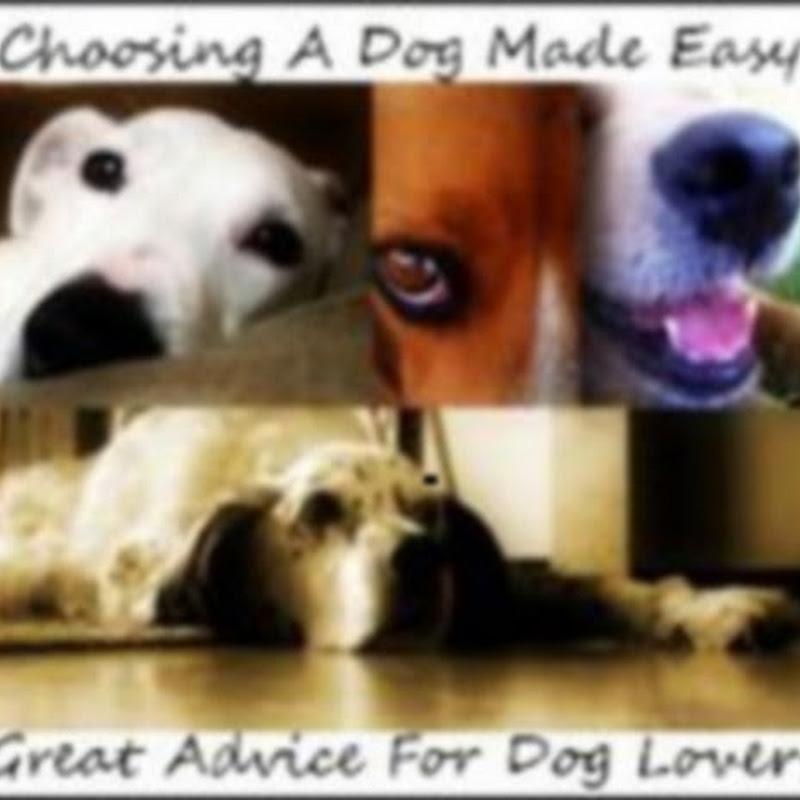 Choosing A Dog Made Easy
